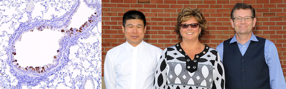 Left to right: Drs. Jianrong Li, Krista La Perle and Stefan Niewiesk, all faculty members at the College of Veterinary Medicine, are working with researchers from the Center for Vaccines and Immunity at Nationwide Children's Hospital to develop a vaccine for respiratory syncytial virus (RSV).