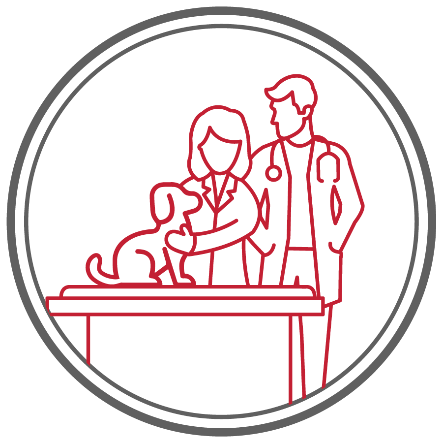 line drawing icon with male veterinarian observing female veterinary student examine dog on table