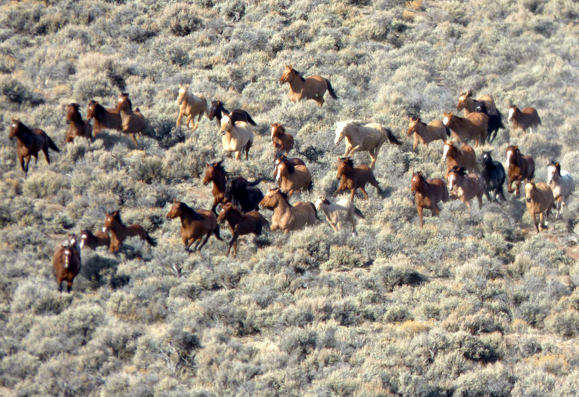 Veterinarian, engineer team up to design contraceptive approach for wild horses   College of...