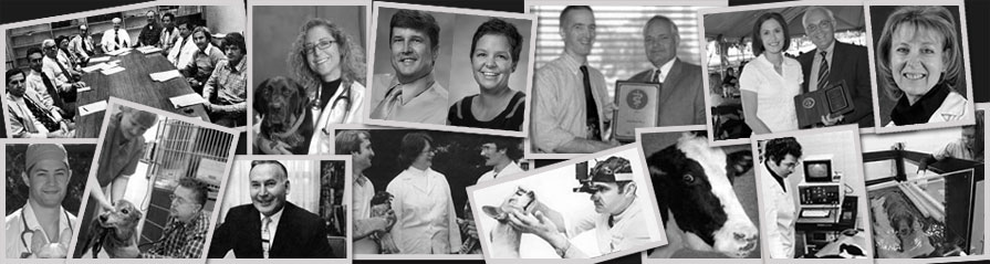 Veterinary Clinical Sciences celebrates 40 years!