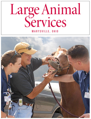 Large Animal Services