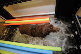 Picture of a dog on a underwater treadmill