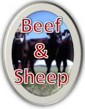 Beef & Sheep Resources