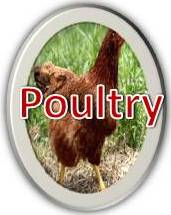 Poultry Resources