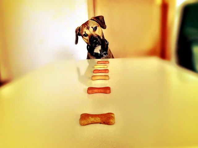 Free-use dog treat image
