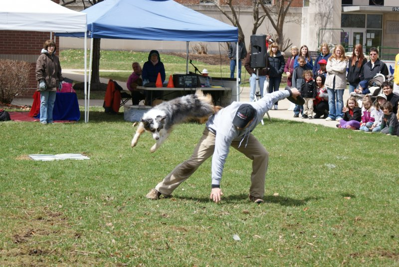 Annual Open House 2014, agility dog performing