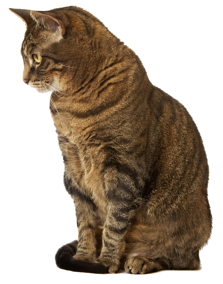 Cats With Blood Clots Veterinary Medical Center