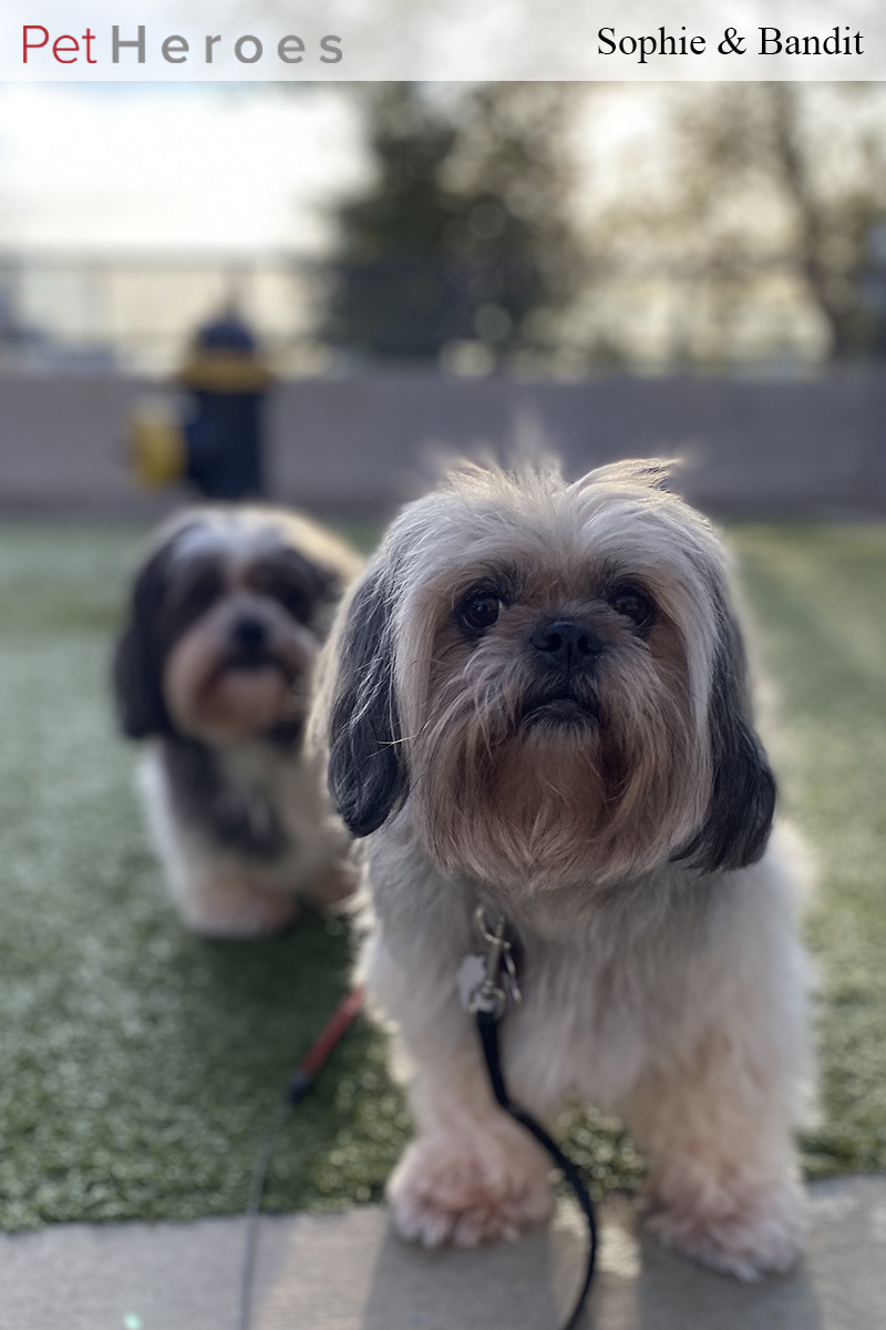 Two dogs standing outdoors