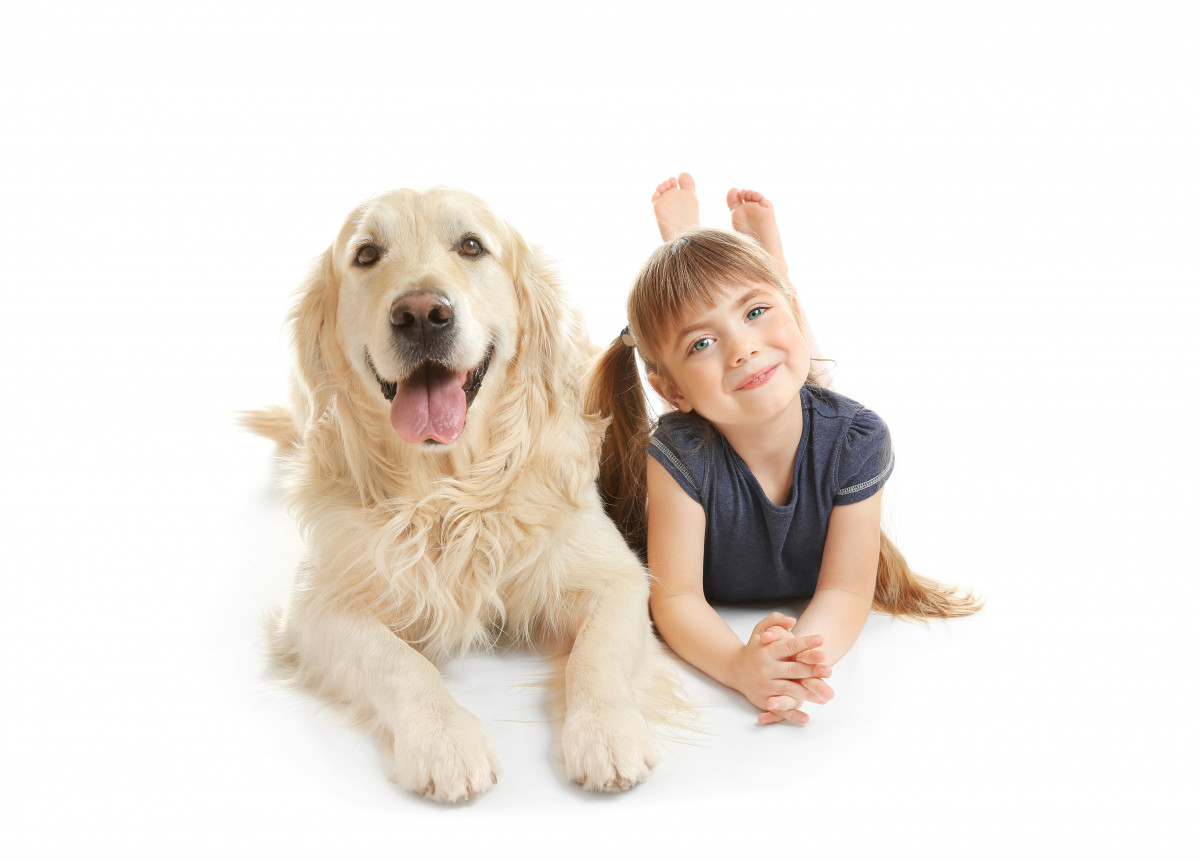 Dog Golden Retriever and girl laying down