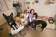 Cristia Iazbik, the Veterinary Medical Center's animal blood bank manager,surrounded by her canine donor friends.