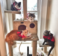 tips for enjoying the holidays with your pets