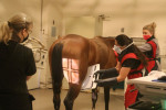 equine radiology technologists and registered veterinary technicians in radiology at Ohio State