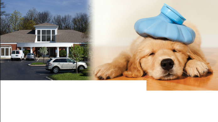 veterinary urgent care Dublin Ohio